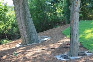 Mocha Limestone flagstone used to create tree rings